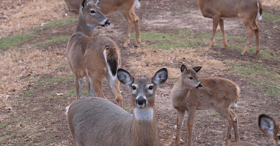 deer guy franchise